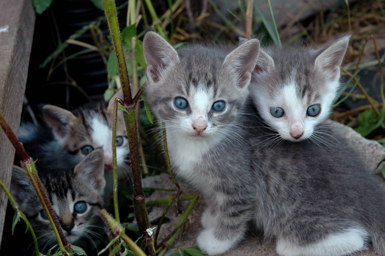 Ask the Mt. Pleasant Animal Veterinary Team: All About Community Cats