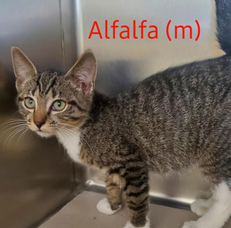 Kittens Available for Adoption at Parsippany Animal Shelter