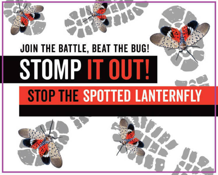 This Earth Day, Help Keep the Spotted Lanternfly out of Union County