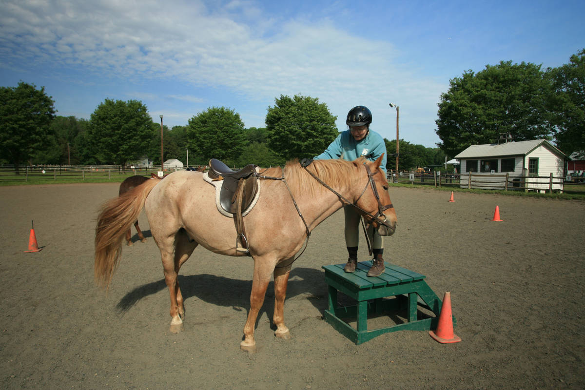 Interested in Horses? 'Time To Ride' Launches New Website