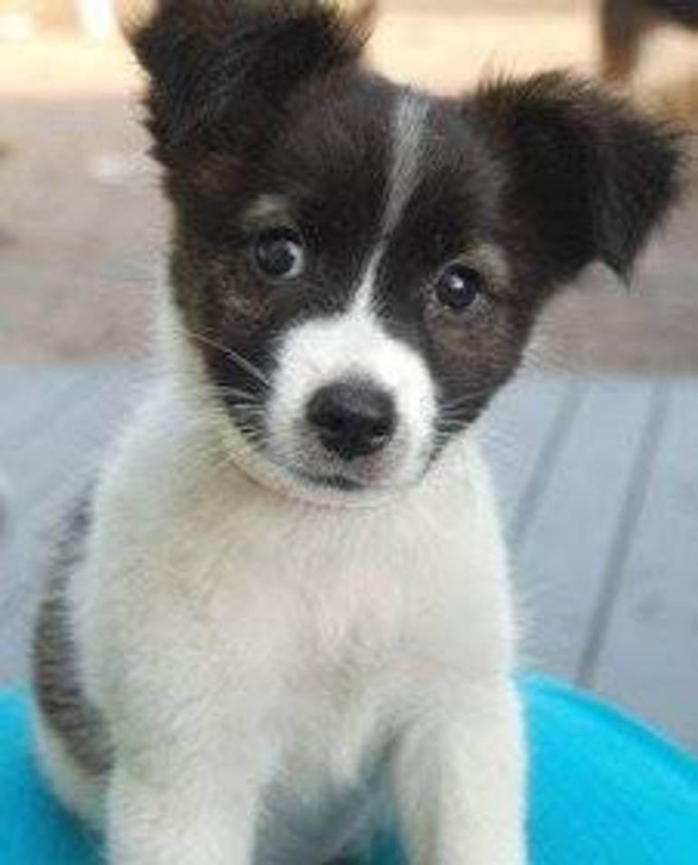 Lilah puppy.jpg