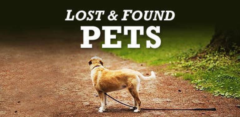 Beagle Spotted on Harrison St, Near Bloomfield Ave in Nutley