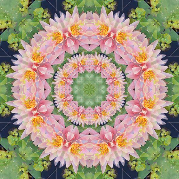 Lotus by Danielle Wilkinson.jpg
