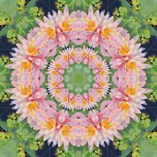 Carousel_image_ad2f0e2377bbb76e9425_mini_magick20190118-28927-mlciie