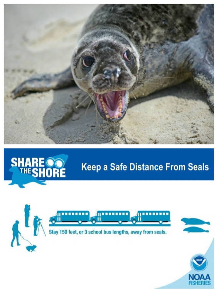 Marine Mammal Stranding Center Warns Beachgoers to Keep Safe Distance from Seals.