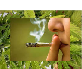 Carousel image c6d85a75883c422b0d4f 5160eef83732bdee1c69 marijuanacollage