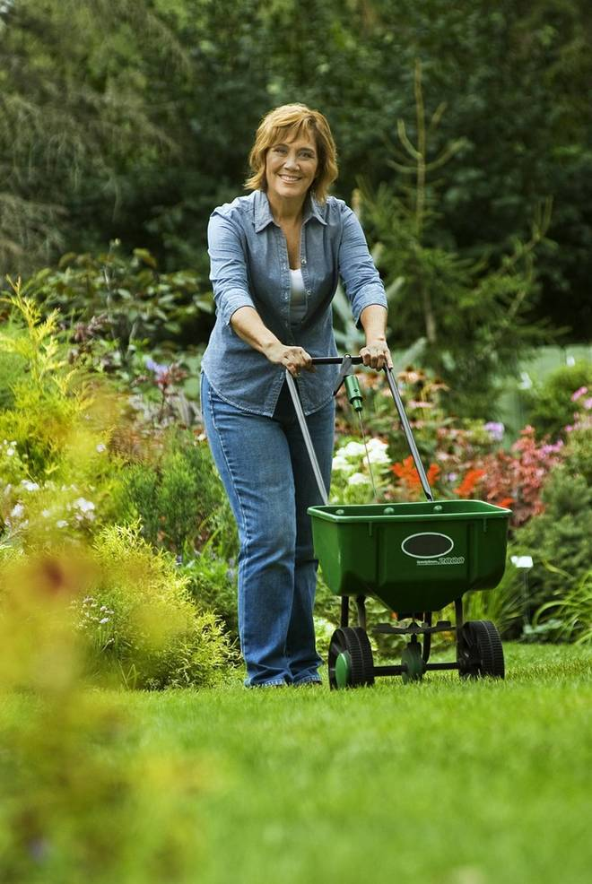 Fertilizing the lawn in fall with a low nitrogen slow release fertilizer will encourage deep roots and denser growth that can better compete with the weeds