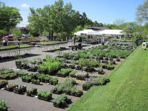 MGC's Annual Plant Sale Is Finally Here!