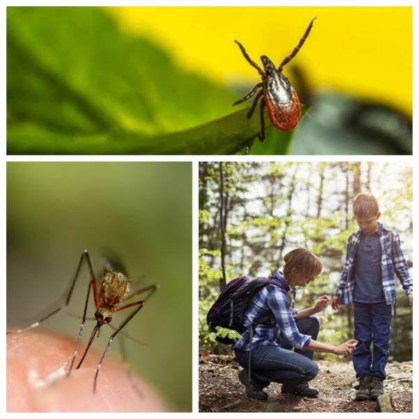 monmouthticksmosquitocollage.jpg