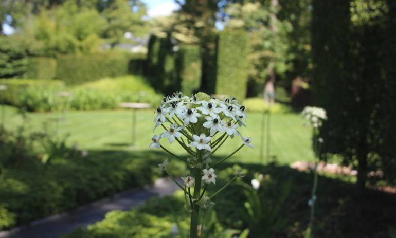 Mountsier Hardie Garden b.JPG