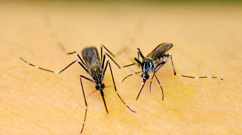 Eastern Equine Encephalitis Found in New Jersey Man