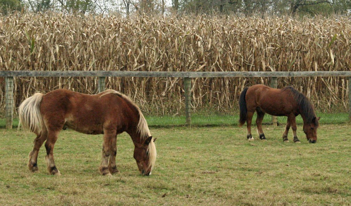 mylestone equine rescue 17006.JPG