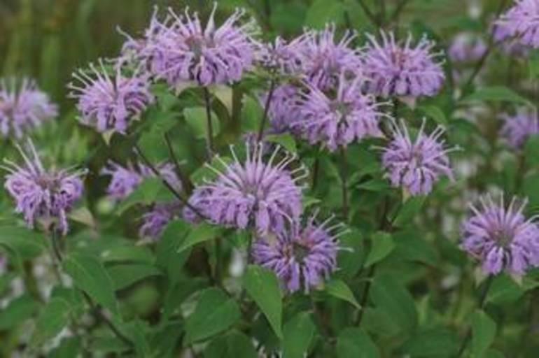 native plant 3.jpg