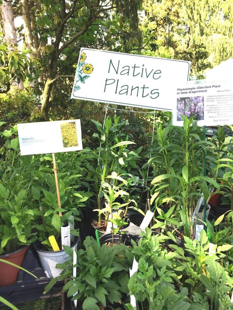 Native Plants photo.jpg