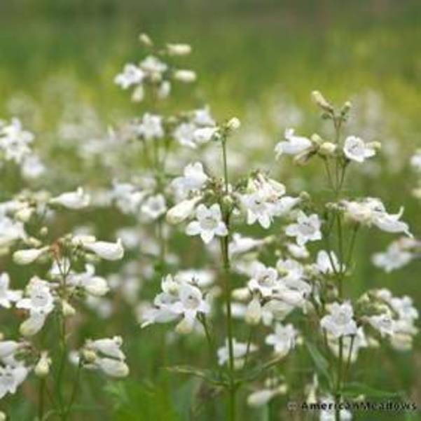 native plant 2.jpg