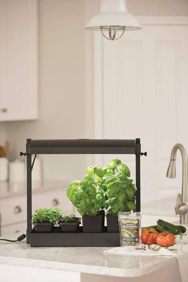 Grow Quick, Easy and Nutritious Microgreens