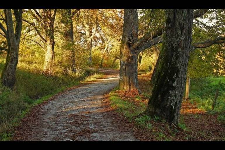 Explore the Natural Beauty of Holmdel: Save the dates for Spring 2020 Friends of Holmdel Open Space Trail Walks, all are welcome