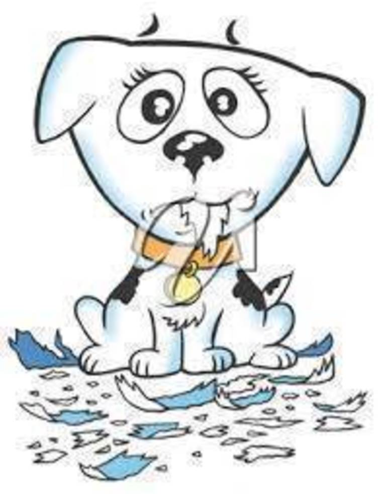 paper  shred puppy.jpg