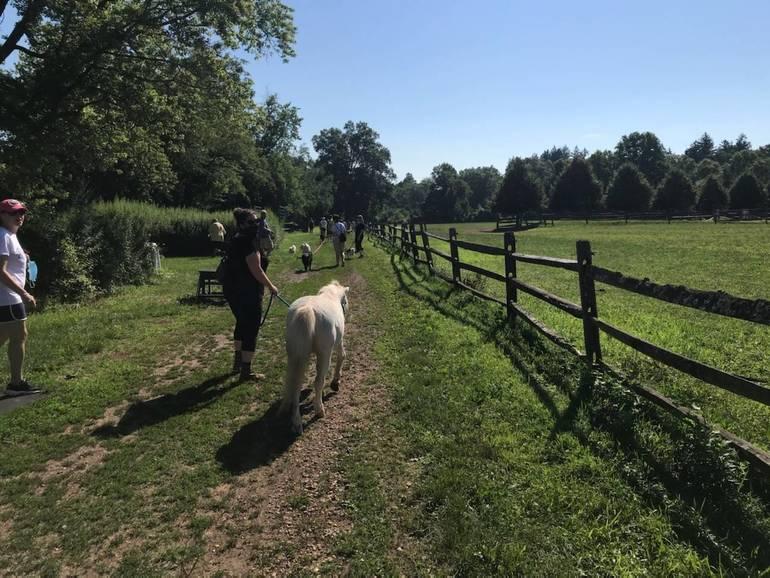 Petie on July 2020 dog walk.jpg