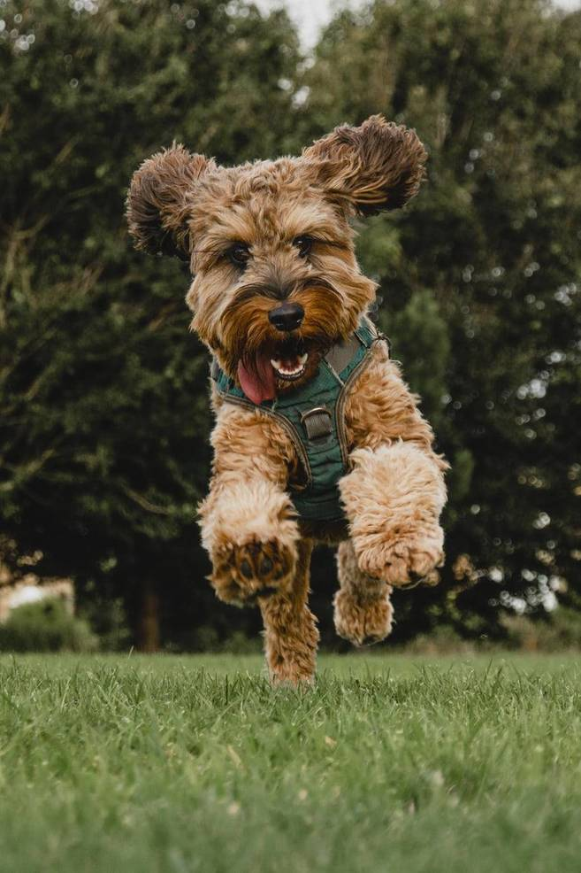 A Better World for Pets®: 🐶 Green Leaf Pet Resort Welcomes VCA Shrewsbury Animal Hospital, Creating the Ultimate All-Inclusive Pet Care Location