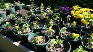 Students Can Plant a Pizza Garden with New Union County 4-H Program
