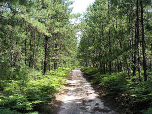 NJ Pinelands Commission Issues Management Report for the Public