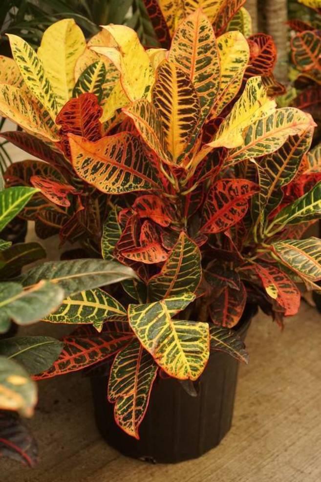 plant7.jpg