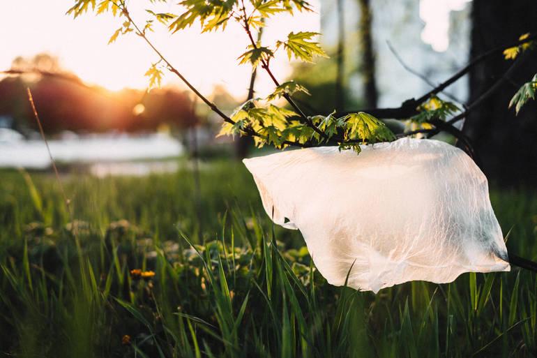 plastic_bag_stuck_on_a_tree.jpg