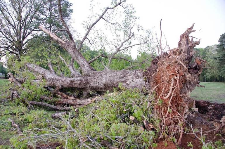 Storm Knocks Out Power and Trees in Warren