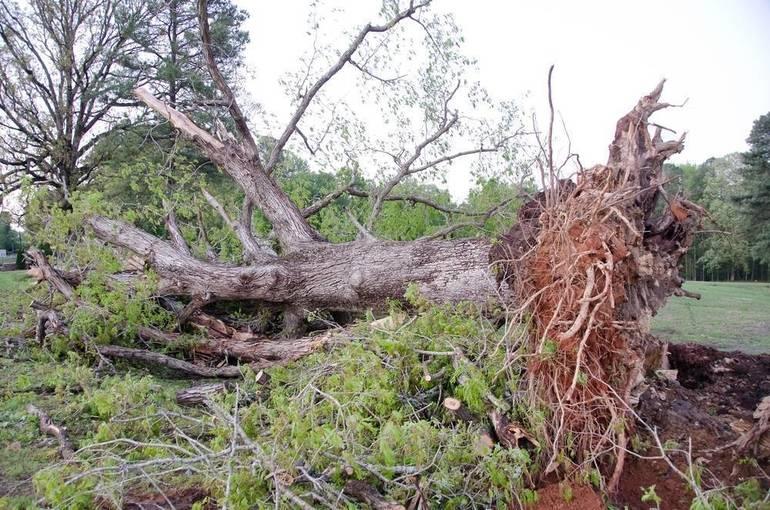 Information Regarding Yard Debris Collection in Madison
