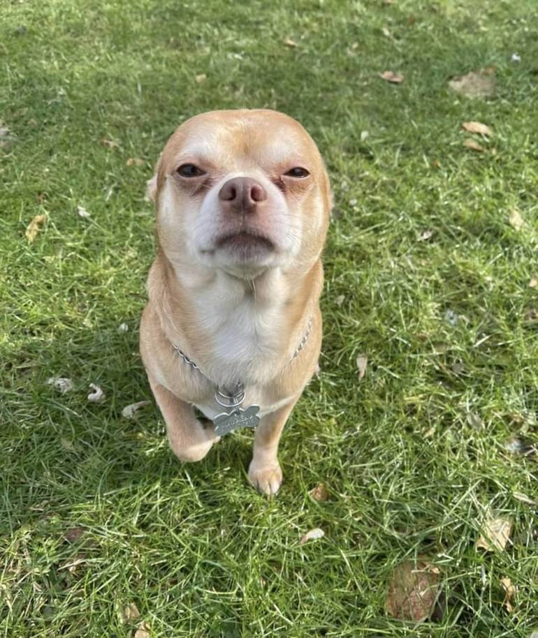 Prancer; The Best Pet Adoption Request Ever?