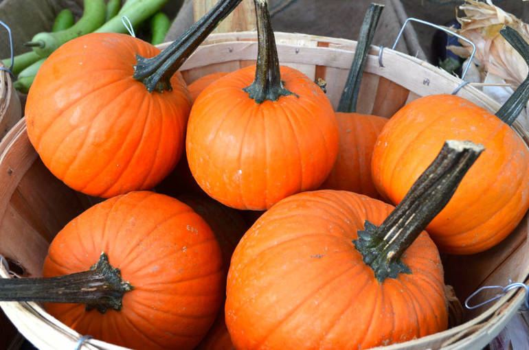 Recycle Your Pumpkins in Madison