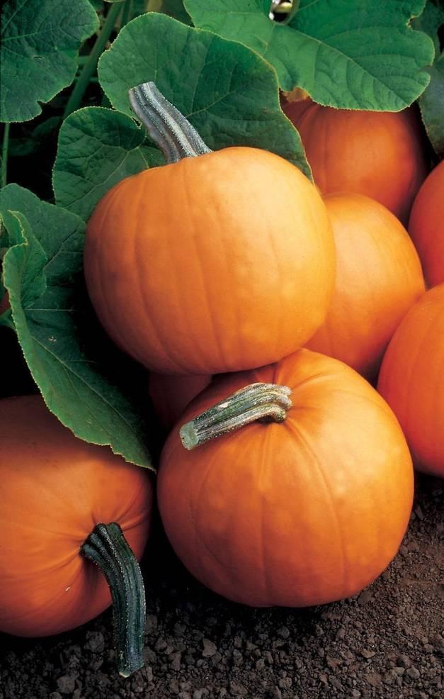 Pumpkin F1Orange Smoothie