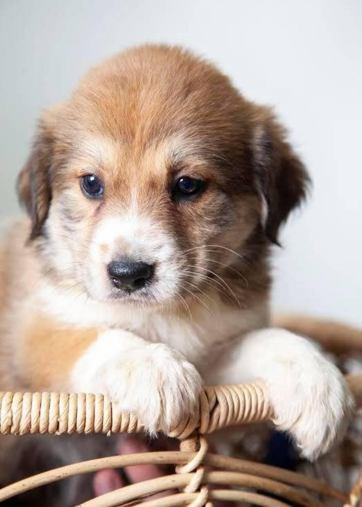 Pup1.jpg