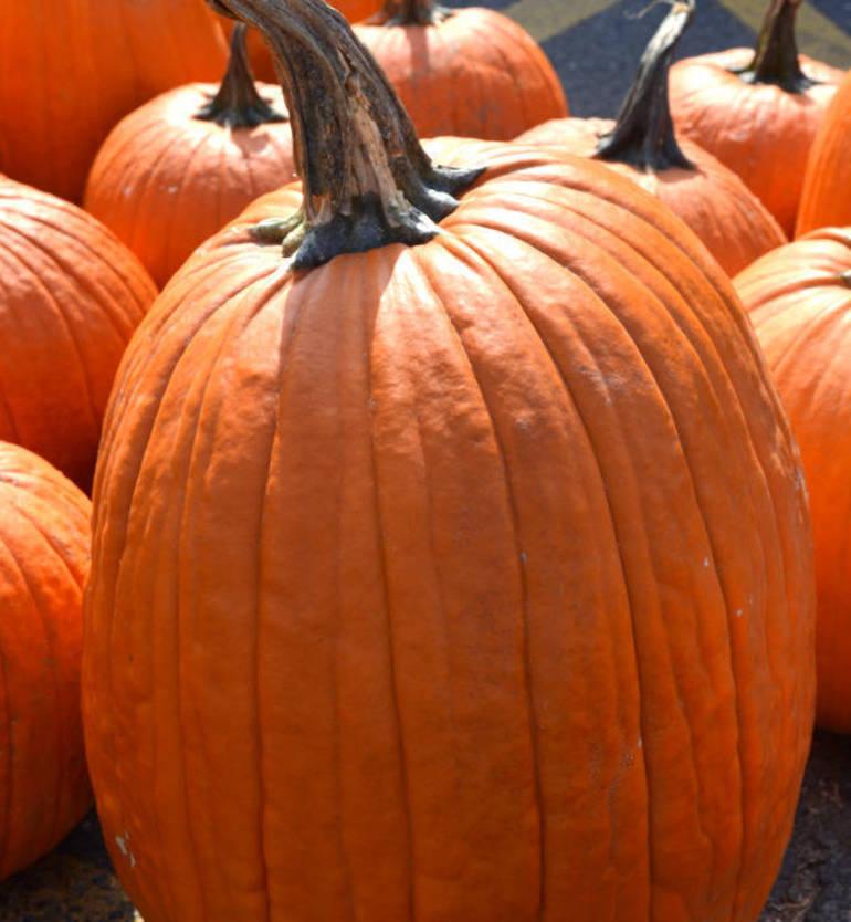 Great Pumpkin Contest Free Pumpkin Giveaway Is Happening Now!