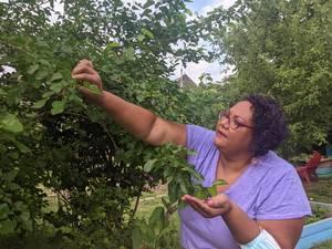 Organic Community Garden Organization Puts Down Roots in North Camden