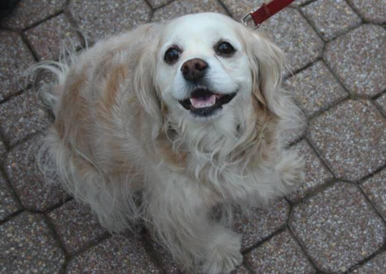 Nutley Vaccination Clinic, Nutley Rabies Clinic, Nutley Dogs,