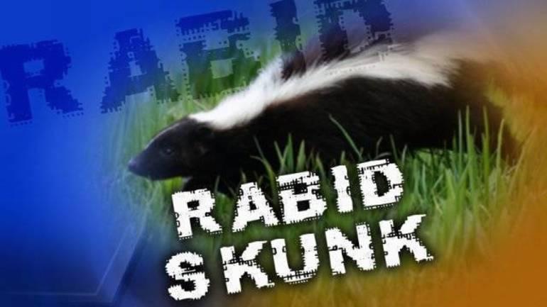 rabid_skunk.jpg