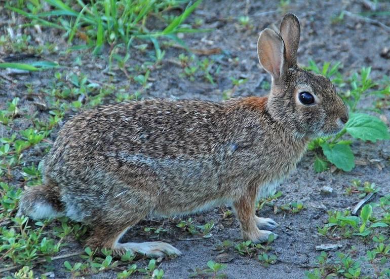 rabbit in garden.jpg