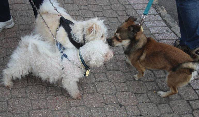 Nutley Free Rabies Vaccination Clinic at Public Safety Building Monday Apr. 26