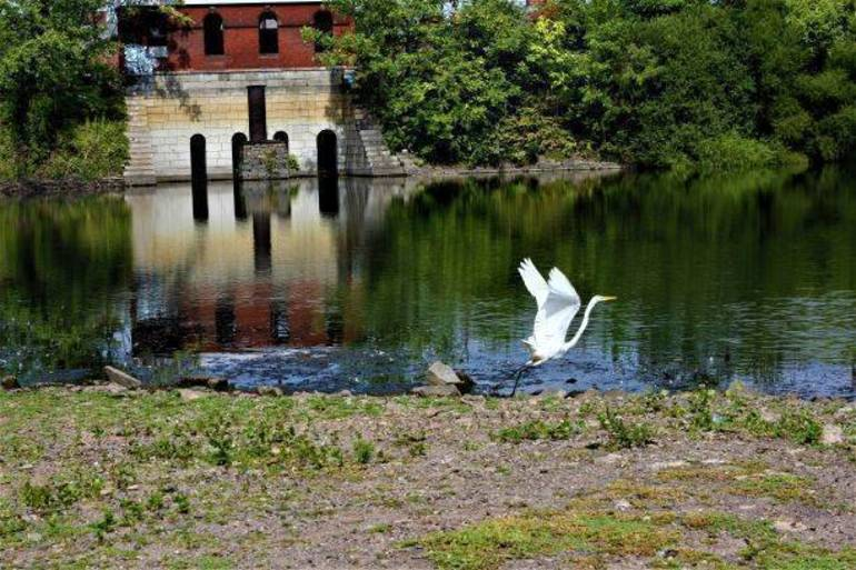 Into the Wild: Jersey City Reservoir 3 Set for Major Upgrade