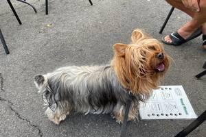 Dog with dog menu at Sheelan's Crossing restaurant in Fanwood, NJ.