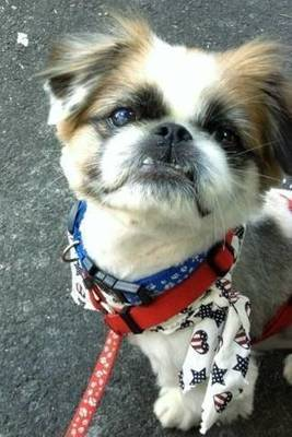 4th of July Fireworks, Rescue Dogs, Pekingese, Fireworks