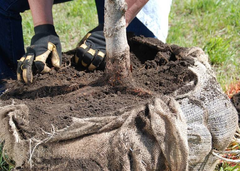 Plant Trees Now for Decades of Shade and Beauty