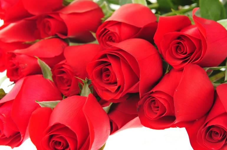 Valentine's Day Rose Fundraiser; Feb. 12 - 14