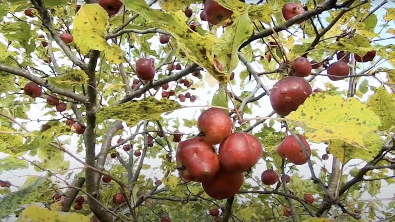 RobertFrost_orchard.jpg