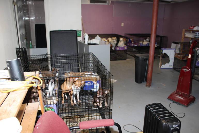 Scotch Plains pet rescue 1.JPG
