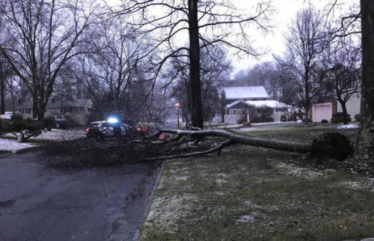 Westfield Storm Trees 2018