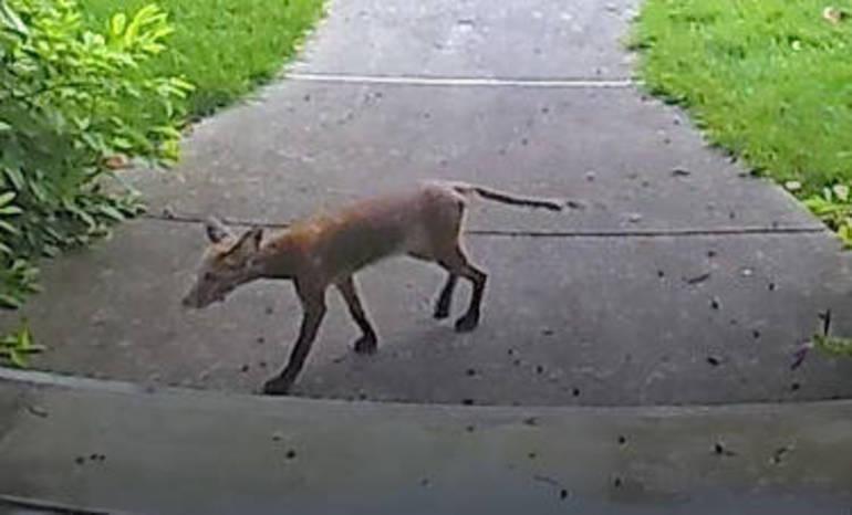 Fox on Boulevard Westfield NJ