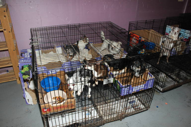 Scotch Plains pet rescue 3.JPG